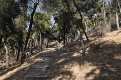 Evening at Mount Lycabettus (Thomas Mülchi) Tags: trees sunset evening forrest path athens greece attica 2016 mountlycabettus