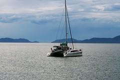 Great Barrier Reef ---- IMG_4410 (harry de haan) Tags: harrydehaan palmcove qld fnq australia queensland wetseason wet greatbarrierreef