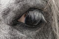 070fotograaf_20160728_025.jpg (070fotograaf, evenementen fotograaf) Tags: 070fotograaf 2016 juli paarden paardenmarkt voorschoten