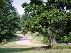 Off to the Woods (HJharland5) Tags: outdoor tree path park arboretum kirtland ohio nikon j5 summer green plant plants walkway woods