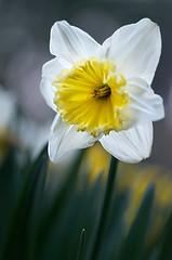 in the garden (bresciano.carla) Tags: flowers naturalmente flickr garden green yellow pentax bokeh