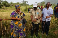 Meeting with local autorithies (FAOemergencies) Tags: africa rice farmers liberia fao ebola emergencies ruralcommunities ebolaoutbreak