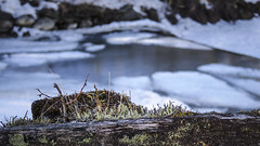 Spring time at the dam (isvei) Tags: wood mars snow ice nature water norway fence march norge is moss spring pond pentax dam natur sørtrøndelag oldwood vann snø vår mose demning 2015 trøndelag soknedal gauldal midtregauldal pentaxq7