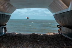Dungeness (mike pelling photography) Tags: sea beach coast boat kent fishing nikon wildlife seagull pebbles dungeness d3100