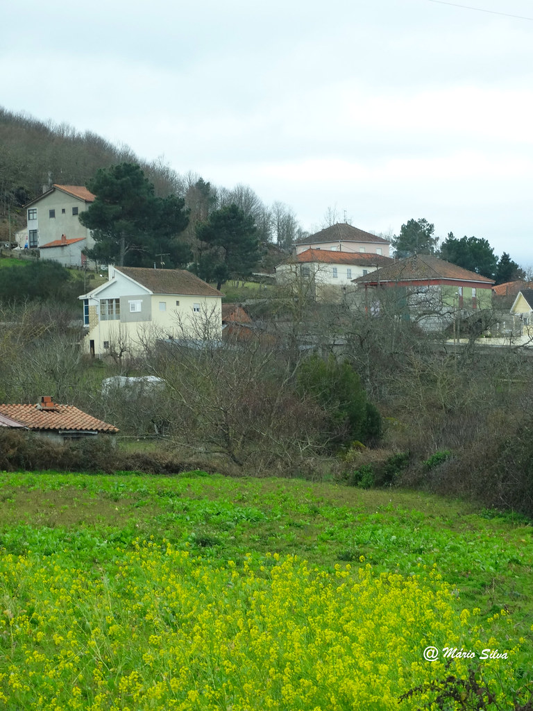 Águas Frias (Chaves) - Os campos amarelos e o casario da Aldeia ...