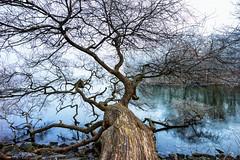 Stockholm, Mars 13, 2015 (Ulf Bodin) Tags: mist tree fog spring frost sweden stockholm sverige rime träd djurgården vår dimma stockholmslän