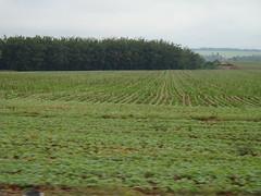 Soja en Paraguay01