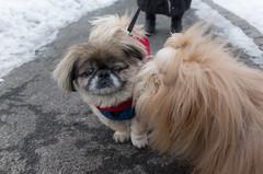 Chewie meets Charley (Charl