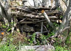 Home Sweet Homeless (Mk) Tags: wood estuary driftwood flotsam shelter sorta graysharbor nobodyhome hoquiam 5thstreetextension mustbeoutworking