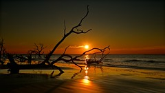 Wild Sunrise (Marie.L.Manzor) Tags: ocean travel trees sea sun seascape beach nature backlight sunrise us sand nikon south southcarolina wave nikkor refelection deepsouth lowcountry marielmanzor nikon610