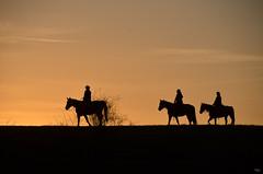 Horseback riding at sunset (taipan_pl) Tags: park sunset horses orange yellow three cowboy poland polska riding national horseback bieszczady wrangler jazda narodowy konna bieszczadzki kowboje