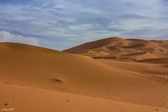 Desert... (Algol69) Tags: freedom desert camel morocco marocco deserto libert cammello
