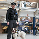 "British sniffer dog<a href=""http://www.flickr.com/photos/28211982@N07/27301819756/"" target=""_blank"">View on Flickr</a>"