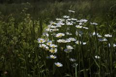 Heading Into Summer (richpoj50) Tags: hss happysliderssunday