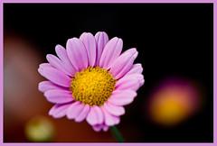AH62_7759 (der_andyrandy) Tags: blumen blte flowers natur garten canoneos7d amazingamazing macro