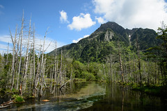 20160527 Kamikochi 6 (BONGURI) Tags: trees lake tree green forest trekking pond nikon df hiking wither walker jp  hiker matsumoto nagano  kamikochi   trekker      withering           afsnikkor2485mmf3545gedvr