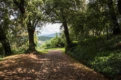 Panzano e dintorni (Sandro Albanese) Tags: verde green landscape landscapes florence tuscany chianti firenze toscana paesaggi paesaggio colline collina panzano panzanoinchianti