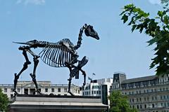 A thought provoking sculpture in London, UK (Trinimusic2008 -blessings) Tags: uk england urban sculpture london trafalgarsquare plinth skeletal horsestatue gifthorse trinimusic2008 judymeikle skeletalriderlesshorse