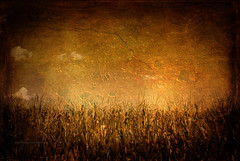 Landscape #19 (Gianmario Masala) Tags: park summer sky painterly milan colors clouds photomanipulation photoshop landscape gold golden countryside artwork wheat gimp exhibition textures photograph fields textured pictorial gianmariomasala
