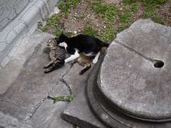 Feral cats in the ruins of Hagia Sofia (sixthland) Tags: church museum turkey istanbul mosque hagiasofia ayasofya 550d