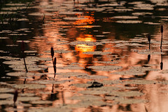 Impression soleil couchant (Adrien Marc) Tags: cambodia sunset water lotus reflection