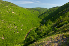 Mackenzie River Valley (scott_clark) Tags: trees canada green nature forest river landscape outdoors woods novascotia view canyon valley spruce hardwood boreal capebretonhighlandsnationalpark