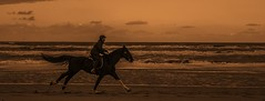 Horse (Haakon von Martinsky) Tags: beach horse sea northsea holland zuidholland autoremovedfrom1to5faves