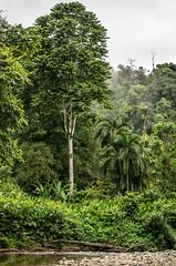 _NGE7827.jpg (Nico_GE) Tags: selvahumedatropical colombia sancipriano pacifico comunidadesafro valledelcauca co