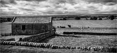 Stainton . (wayman2011) Tags: canon50d lightroom wayman2011 bwlandscapes mono oldbarns oldbuildings drystonewalls sheep fields rural pennines dales teesdale stainton countydurham uk