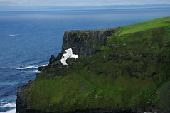 Cliffs of Moher (Angelo Petrozza) Tags: cliffs moher ireland aillte an mhothair scogliere della rovina landscape panorama pentaxk20d seagull