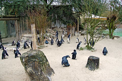 Allwetterzoo Mnster (Gnter Hentschel) Tags: d50 germany deutschland tiere nikon europa tiger nikond50 alemania nrw allemagne pinguin katzen mnster germania br lwe allwetterzoo elefanten allwetterzoomnster d40 raubtiere wildtiere nikond40