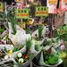 近江町市場-正月花