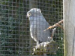P4010027 (Vicky Hardingham) Tags: zoo meerkat leopard lemurs otters snowleopard owls banham