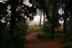 . (*Kicki*) Tags: trees mist fog forest woods sweden path explore dimma roslagen grisslehamn flickrexplore väddö explored albertengström