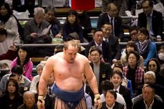 Sumo in Osaka-16 (Rodrigo Ramirez Photography) Tags: japan amazing traditional professional tournament osaka sumo yokozuna ozeki makuuchi hakuho sumotori sumotournament maegashira reikishi harumafuji topdivision
