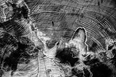 Wooden abstract (fsanty) Tags: wood trees abstract nature canon eos blackwhite 50d canonefs1755mmf28isusm