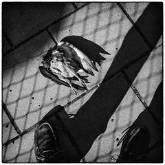 Urban jungle (stejo) Tags: shadow death shoes upsidedown stockholm pigeon streetphoto slussen urbanjungle sebago duva dd stonetiles uppochner gatufoto stenplattor seglarskor storstadsdjungel prygg ilobsterit sukugga
