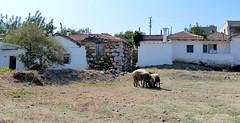 Village de Duzce (Raymonde Contensous) Tags: turquie izmir dzce seferihisar villagesturcs dzcevillage