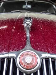 Jaguar - 2 (Isabelle Gallay) Tags: auto street old city urban car automobile fuji garage voiture collection fujifilm jaguar ville urbain aquitaine gironde saucats fujix30