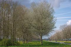 De Flevopolder bloeit weer op (JaapFoto) Tags: road tree grass spring outdoor boom gras lente sprout bloemen flevoland weg almere vogelweg ontspruiten