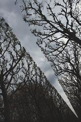 Ouverture dans le ciel (StephanExposE) Tags: paris france tree nature canon garden jardin arbre iledefrance parc sceaux 1635mm parcdesceaux 600d 1635mmf28liiusm stephanexpose