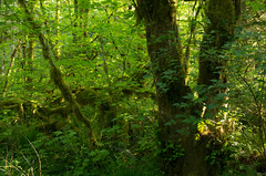 _IGP0185.PEF Wildwood Cascade Streamwatch Trail (niiicedave) Tags: park sunset oregon forest evening moss dusk walk scenic trail cascadia cascaderange northeastoregon riparianforest clackamascounty mthoodforest hoodland wildwoodrecreationsite guidednaturewalk springleavesnewgrowth salmonrivertownorplace welchestownorplace cascadiangeographicprovence westerncascadeforest usdibureauoflandmanagement salmonriverriver uswildandscenicriversystem caltopoelevation1175feet