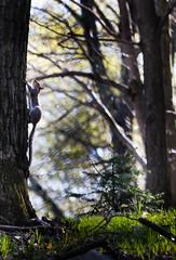 2016-04-24 17.09.09-5.jpg (michaelbbateman) Tags: wildlife squirel
