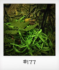 """#DailyPolaroid of 23-3-16 #177 • <a style=""""font-size:0.8em;"""" href=""""http://www.flickr.com/photos/47939785@N05/26848016275/"""" target=""""_blank"""">View on Flickr</a>"""