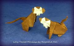 Long Tailed Monkeys by Raymond Yeh (Thomas Krapf Origami) Tags: paper monkey origami ape raymond papier paperfolding yeh affe papierfalten raymondyeh