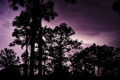 Lightning Storm (FunkadelicSam) Tags: trees storm nature rain night clouds forest dark photography cool long exposure florida creepy lightning