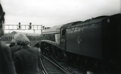 img601 (OldRailPics) Tags: newcastle steam kingfisher british locomotive railways 60024