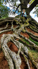 Strong Roots (Celebrating over 2 million views. Thank you) Tags: life red woman tree green home me nature hat mobile wonder happy heaven phone place earth secret special soil together cumbria instructions spiritual lungs devine selfie hugger weekendaway strongroots ornorthyorkshire