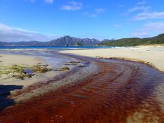 Lagoon Sealers Bay (dracophylla) Tags: newzealand codfishisland whenauhoa
