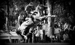El bayo rabicano (Eduardo Amorim) Tags: brazil horses horse southamerica criollo caballo uruguay cheval caballos cavalos pferde cavalli cavallo cavalo gauchos pferd hest hevonen chevaux gaucho  amricadosul hst uruguai gacho  amriquedusud  gachos  sudamrica suramrica amricadelsur  sdamerika crioulo caballoscriollos criollos jineteada   cerrolargo americadelsud gineteada  crioulos cavalocrioulo americameridionale caballocriollo eduardoamorim cavaloscrioulos  pasodeldragn plcidorosas